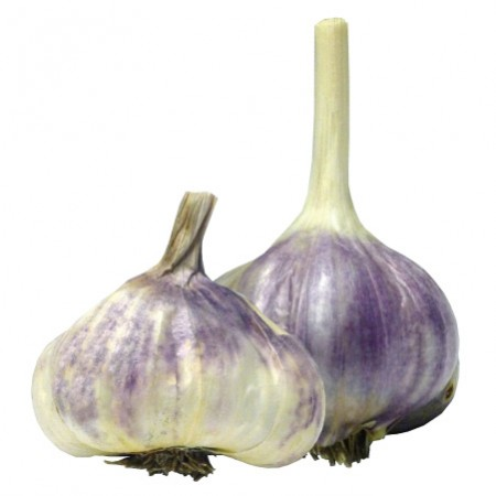 img-wisconsingarlic-garlic